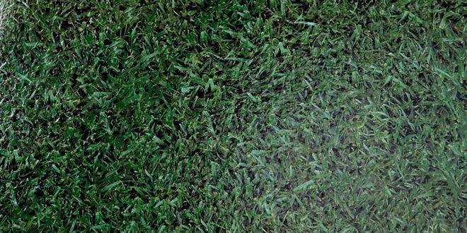 IM7001-Grass-NEW